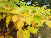 Wildlife Trust warns that floods are increasing the spread of Japanese Knotweed