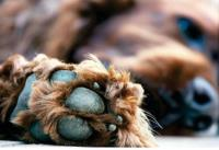 PAW & CLAW INTEGRITY