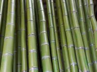 Lots of Bamboo Poles for a Major Movie