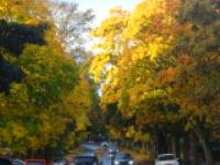 The Miracle of Autumn Colour