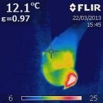 Hidden pigeons revealed by thermal camera