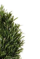 Best selling Topiary Tree. Enhance your business entrance.