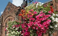 Tips for Britain in Bloom – Horticultural achievement