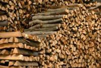 Forest Stewardship Council (FSC) extends SGS's accreditation to deliver Chain of Custody certification services