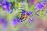 Bee Friendly Plants For Your Garden