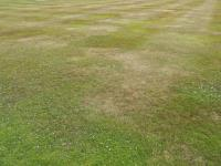 Caring For Your Lawn In Hot Weather