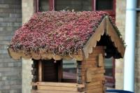 How To Care For Your Green Roof In Spring?