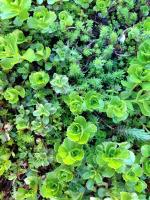 How To Grow Groundcover Plants