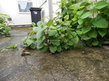 Geo-textile non-permeable membranes For Japanese Knotweed