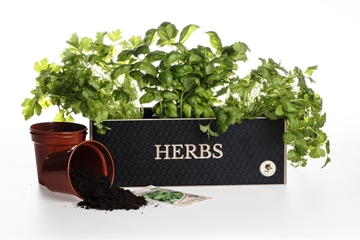 High Quality Personalised Herb Planter