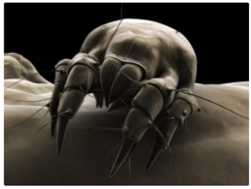 Dust Mites Removal Services