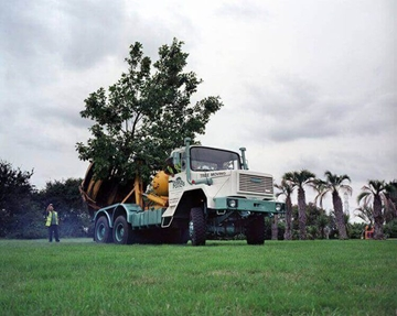 Large Tree Transplanting Services