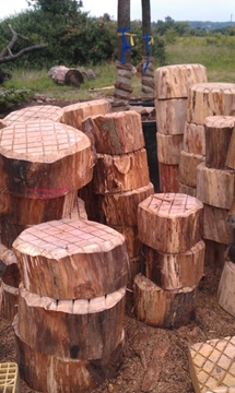 Natural Timber Childrens Play Area Services