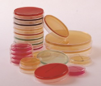 55mm Petri Dishes