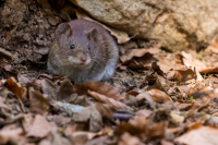 Environmental Solutions For Pest control
