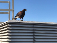Falconry Solutions