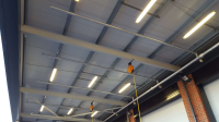 Pigeon Proofing Services
