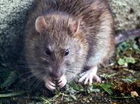 Commercial Pest Control Specialists