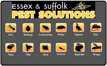 Contract Pest Control Services In Suffolk