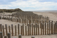 Environmentally Friendly Treated Landscaping Poles