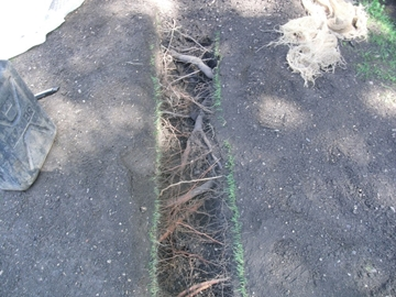 Air Spade Services For Root Investigation