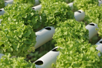 Bespoke Plastic Extrusions Products for Hydroponic Applications