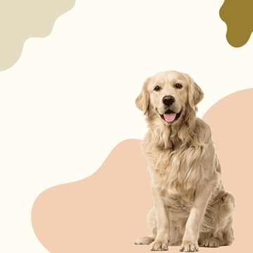Distributor Of Nutritionally Balanced Pet Food For Dogs