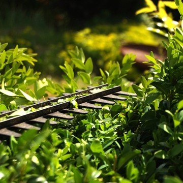 Hedge Cutting Service Lincolnshire