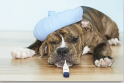 Pet First Aid Courses London