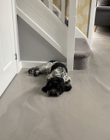Polyaspartic Resin Flooring Leicestershire