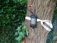Tree Vigour Assessment Using Sapflow Technology In Knowsley