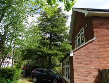 Tree Risk Assessment to QTRA Standards In Warrington