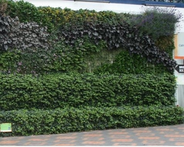 Installers Of Ivy Living Green Screens
