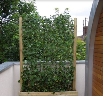 Suppliers of Timber Planter Boxes