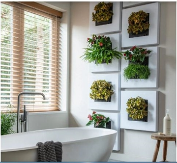Suppliers Of Plant Pictures For Home