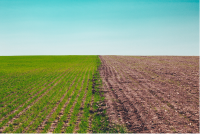 Remediation Strategy for Contaminated Land Sites