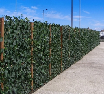 Suppliers of Living Plant Walls