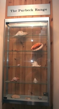 Top Collector Cabinets With Mirror Base Panel