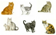 Cats and Kittens Ceramic Transfers