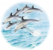 DOLPHIN PLATE CENTRE CERAMIC TRANSFER