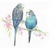 Budgies Prints