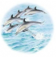 Dolphin Plate Centre