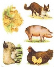Farm Animals Prints