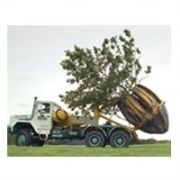 Tree Moving Services