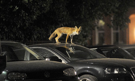 Dealing with Foxes