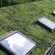 Biodiverse roofing