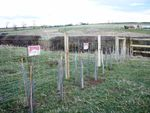 Agricultural and Estates Fencing
