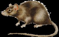 Rodenticides Concentrates for Local Manufacture