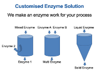 Customised Enzyme Solutions