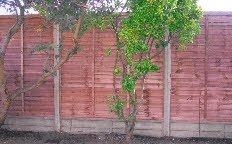 Lapped Panel Fencing